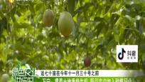萬寧: 引入百香果產業 豐富北大村產業結構