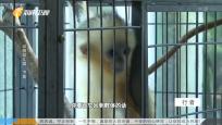 動物幼兒園·下集