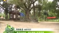 澄邁宋嶺村:綠水相伴 生態宜居