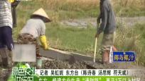 """東方:修建農業生產""""通財路"""" 惠及3萬以上村民"""