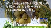 海胶启动十万亩水果型矮种椰子种植项目