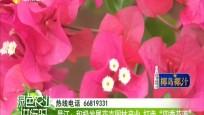 """昌江:积极发展花卉园?#26893;?#19994; 打造""""四季花海"""""""