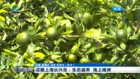 点睛上海长兴岛:生态涵养 海上橘洲
