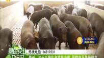 儋州:加大生豬生產扶持力度 保障肉品供給穩定