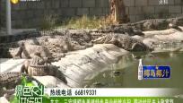 東方:三家鎮鱷魚養殖特色產業悄然興起 帶動村民走上致富路