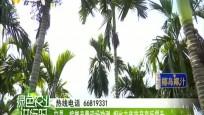 屯昌:檳榔產量現場勘測 相比去年畝產有所提升