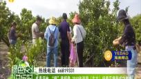 """感恩福地""""橙""""意相邀 2019年海南(東方)綠橙采摘節成功舉辦"""
