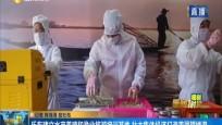 乐东建立水产养殖和渔业旅游培训基地 壮大集体经济打造美丽望楼港