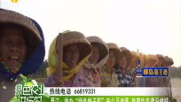 """昌江:举办""""绿色娘子军""""奋斗足迹展 致敬生态建设榜样"""