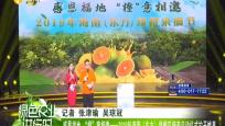 """感恩福地""""橙""""意相邀——2019年海南(東方)綠橙采摘節啟動儀式拉開帷幕"""