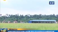 海南省政策扶持农业经营主体发展 促进小农户与现代农业发展有机衔接