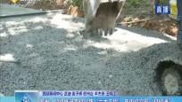 """儋州:加快推进农村公路""""六大工程"""" 年内将实现""""村村通"""""""