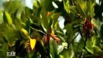东寨港新增红树林 平衡稳定生态系统