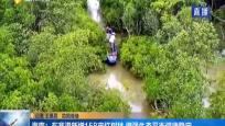 海南:東寨港新增158畝紅樹林 增強生態平衡健康穩定