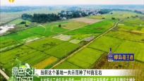 《綠色農業進行時》2019年11月11日