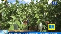 """儋州:植物""""奇人""""研发""""旺根技术""""  """"百年大树""""十年长成"""