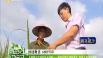 乡村振兴工作队队长谌彪一一探索稻鸭共育新模式 打造品牌促农增收