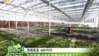 万宁将建15亩瓜菜集约化育苗工厂