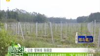 """定安美太村乡村振兴工作队队长陈效东:""""龟""""划产业走上致富路"""