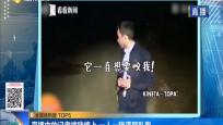 直播中的记者被猪缠上 一人一猪满屏乱跑