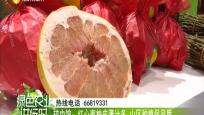 琼中馆:红心蜜柚皮薄多汁 山区种植保品质