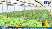 海口菜篮子开展基地防寒抗冻工作 春节特殊菜品明年1月13日起供应