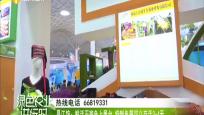 昌江馆:鲜活石斑鱼上展台 特制鱼箱可以存活3-4天