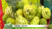 澄迈馆:奇异诺丽产业成熟 野菜扶贫全村增收