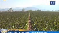 """东方:农技人员田间""""把脉"""" 为农业生产保驾护航"""