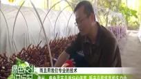 儋州:鹿角灵芝品质好价值高 新产品即将亮相冬交会