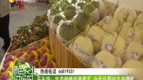 乐东馆:生态种植优质蜜瓜 合作社带动农户增收