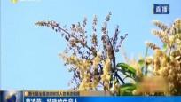 第七届全国道德模范人物事迹展播 黄凌燕:特殊的生意人