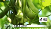 临高:调整农业产业结构 毛豆成农户增收新品种