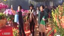 帮年货:花卉市场人气旺 记者提前帮打探