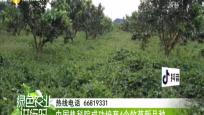 中国热科院成功培育4个牧草新品种