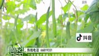 三亚冬季瓜菜进入产销旺季 日均出岛突破3000吨