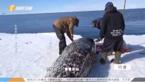 北極留學生 尋根之旅