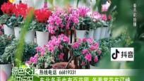 東北冬天也有百花園 冬季賞花在遼峰