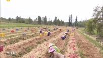"""东方:政府搭台积极对接 解决农户""""卖难""""问题"""