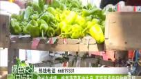 儋州東成鎮:恢復蔬菜基地生產 客商積極響應收購泡椒