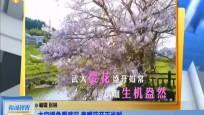 太空視角看武漢 春暖花開正當時