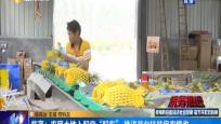 """臨高:農民土地入股變""""股東"""" 推進產業扶貧促農增收"""
