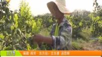 """东方:劳务输出队成了""""致富队"""""""