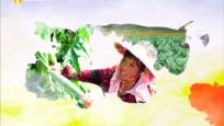 《绿色农业进行时》2020年03月20日