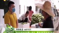 瓊中什統村駐村第一書記:幫農戶打開農產品市場