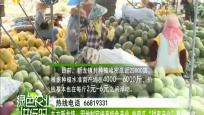 """东方新龙镇:因地制宜培育特色产业 哈密瓜""""甜蜜产业""""喜获丰收"""