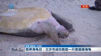 世界海龟日:三沙市成功救助一只受困绿海龟
