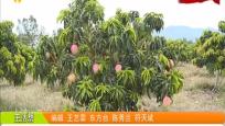 東方:引進芒果新品種 優化農業產業結構