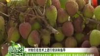 《綠色農業進行時》2020年05月23日