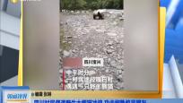 四川村民偶遇野生大熊猫冲浪 功夫娴熟惊呆网友